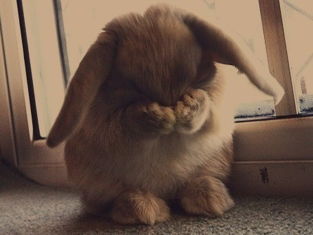 Let's empathize with this embarrassed rabbit and subconsciously soften the awkwardness of the ensuing blogpost.